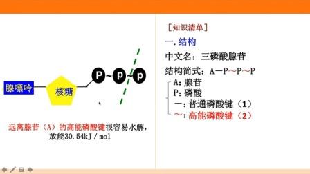 (新课程改革)人教版高中生物大型公益课 细胞的能量通货-ATP