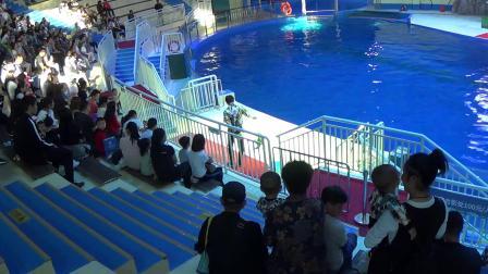 寿光极地海洋世界一日游,看美人鱼表演、海洋剧场、萌宠表演_20180923