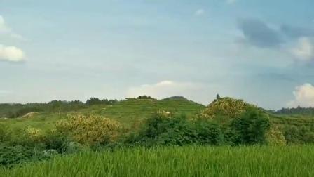张可福:风水寻龙点穴 风水宝地骊龙夺珠 天降吉兆
