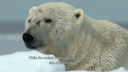 Kering-The Explorers: Polar Bears in the Arctic