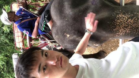 泰国大象3