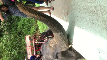 泰国大象5