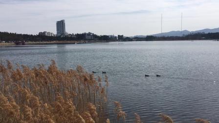 韩国江陵镜浦湖