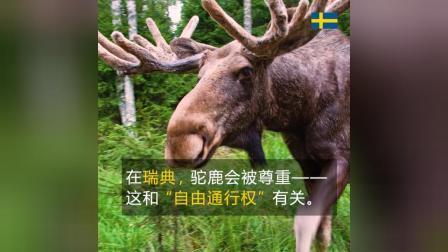 瑞典自由通行权
