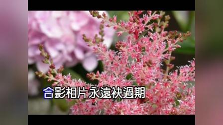 雨の东京 真木ひでと 幸福花园【演歌新词创作】 美悠子 台语作词