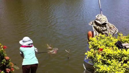 野塘鱼就是够力