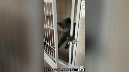 小猫  秦兆虎弟子郭小兵