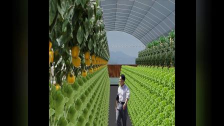 1760平方米联栋温室型雾培蔬菜工厂设计