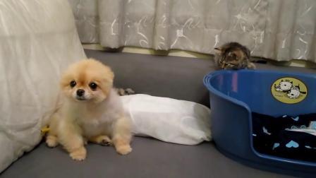 小貓咪偷袭傻P仔, 太好笑了吧-^_^