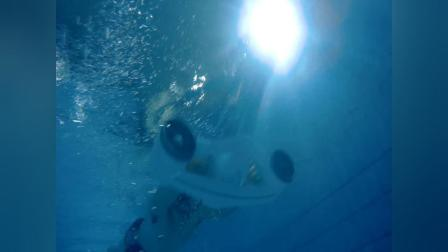 ROBOSEA最新产品——手持式水下飞行器,水下飞行视频来了!