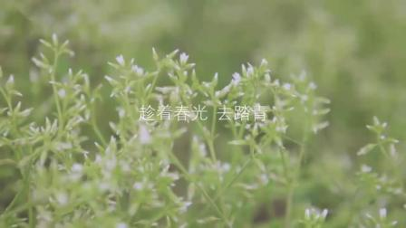 夏季食谱家常菜_茶香排骨