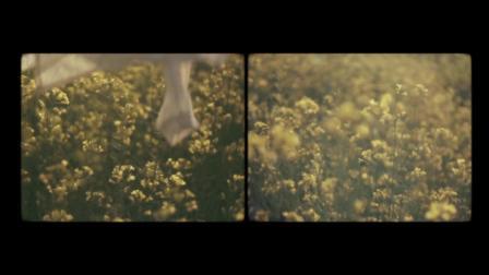 Sweet Gum Tree feat. Isobel Campbell - Bird of Passage