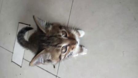 好可爱的猫🐱