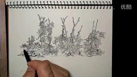 汤向钢笔画~教程篇~豆茎_标清