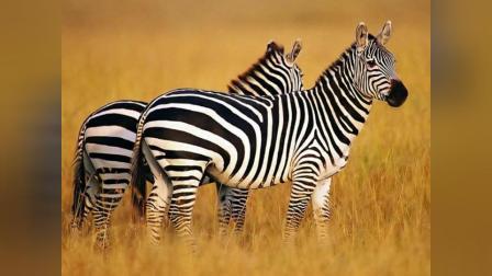 2282 高清晰的动物图片欣赏(2)tdc