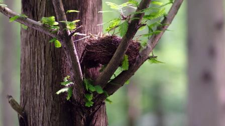birds nest between the branches of a tree