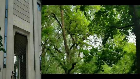 鼎欣网络南京游,南朝四百八十寺,多少楼台烟雨中