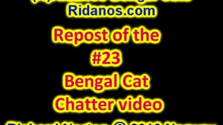 Bengal chatter 23