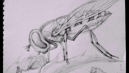 素描绘画蜜蜂步骤