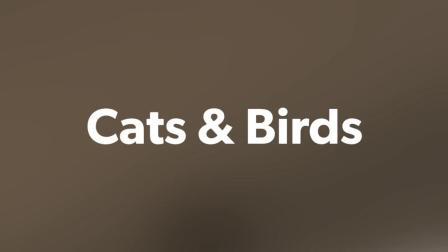 Birds & Cats