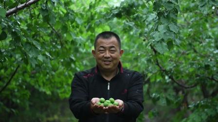 特克斯杏家园水果线上 销售农户称自己是天猫聚划算粉丝