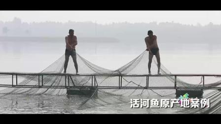 活河鱼原产地案例