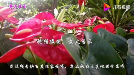 林淑容李茂山原唱经典情歌《无言的结局》永恒的经典对唱情歌