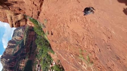 塞多纳红岩导游-小狗也能毫无畏惧登山哦