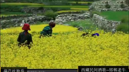 《西藏民间酒歌》--邯郸老牛(附:李仲培老师点评)