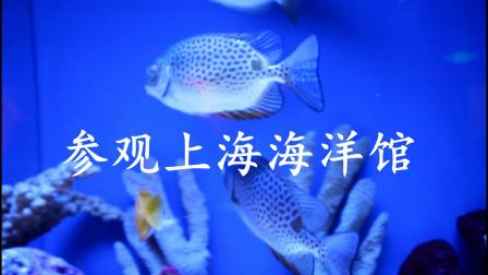 参观上海大自然博物馆