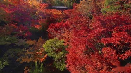 《静美樱花之国》预告片『ピース・ニッポン』2018