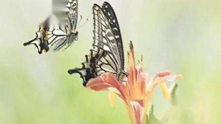 生日快乐 两只蝴蝶