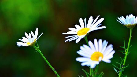 花儿与音乐2