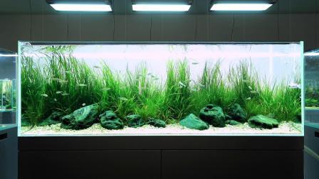 自然水族展厅内水景 游戏清流