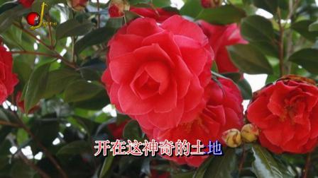 山茶花旗袍火锅《山茶花图片》宣传片