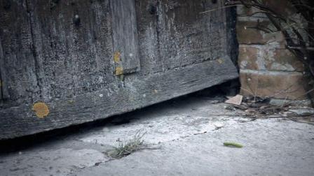 Minuscule.S02E02.2012.DVDRIP.XVID.Homeless