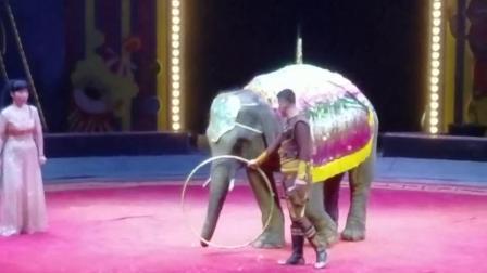 我们马戏团大象表演现场很受欢迎小象表演南宁大象表演出租电话长沙大象出租表演泰国象表演节目大象表演精彩节目视频小象训练视频有没有大象资源电话号码