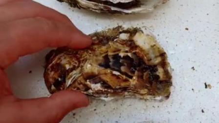 挑生蚝要选饱满外皮光净的  重量适当的 太重可能皮太厚有沙子太轻可能肉少