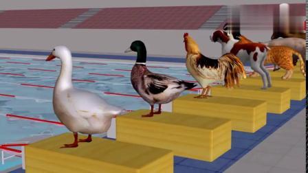 猫、狗、鸡、鸭等小动物比赛游泳,看谁得第一吧