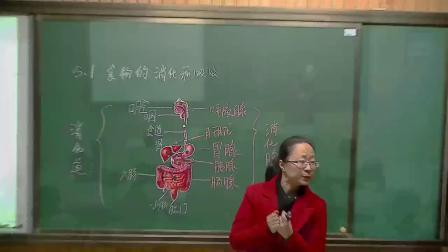 華師大版科學八上5.1《食物的消化和吸收》課堂實錄教學視頻-第一課時,范蓉蓉