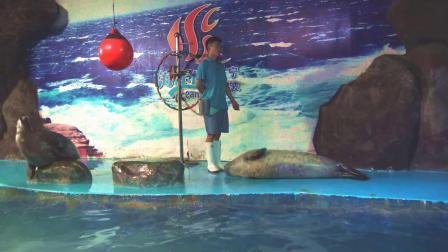 宁波海洋世界〈海豹表演(5-2)〉