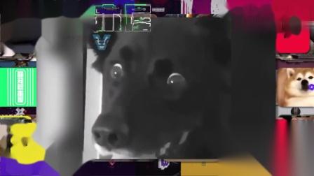 当狗狗看见被切的狗型蛋糕时……