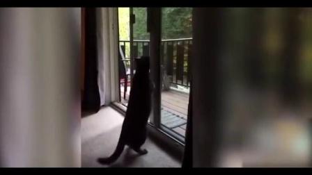 宠物宠物搞笑视频,那些犯傻的猫咪