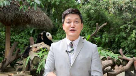 【藏马】长隆村长研学团·动物大闯关