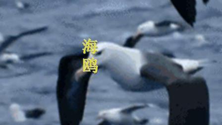 萨克斯演奏海鸥