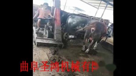 养殖场清粪车自走式牛粪清粪车牛粪拾粪车场内工作视频