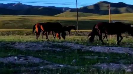 -巴音郭楞蒙古自治州