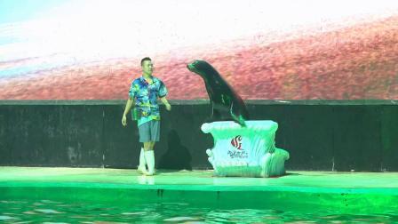宁波海洋世界《海狮 海豚表演(5-5)》
