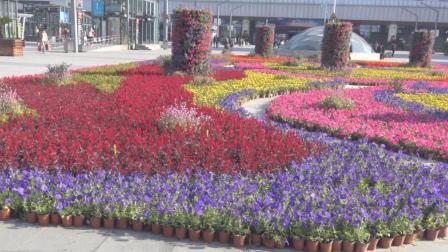 庆国庆 花坛造型