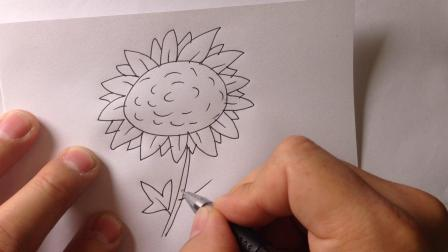 金龙手绘-简笔画植物.向日葵的画法2
